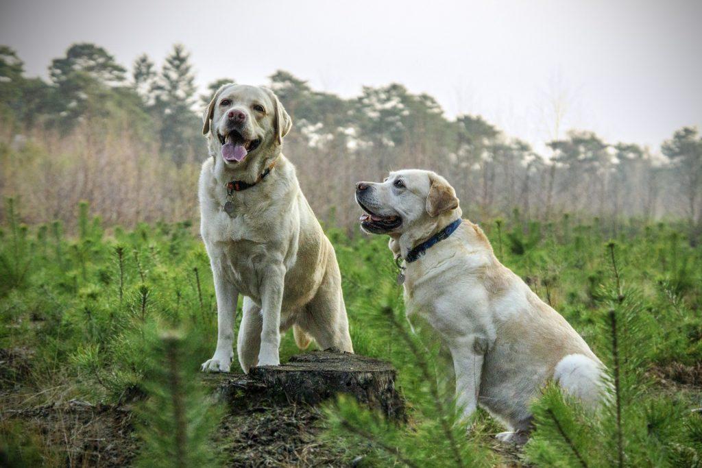 exhibicion canina